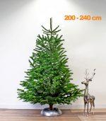 nordmann-echte-kerstboom-200-240
