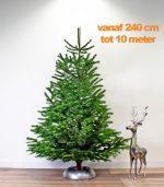 nordmann-echte-kerstboom-240-10-meter